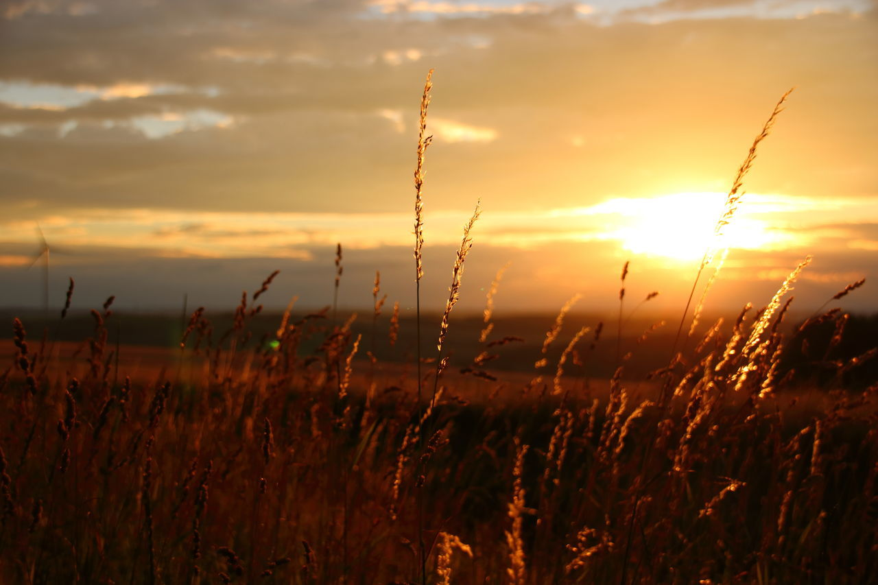 Close-Up Of Fresh Grass In Field Against Sunset Sky