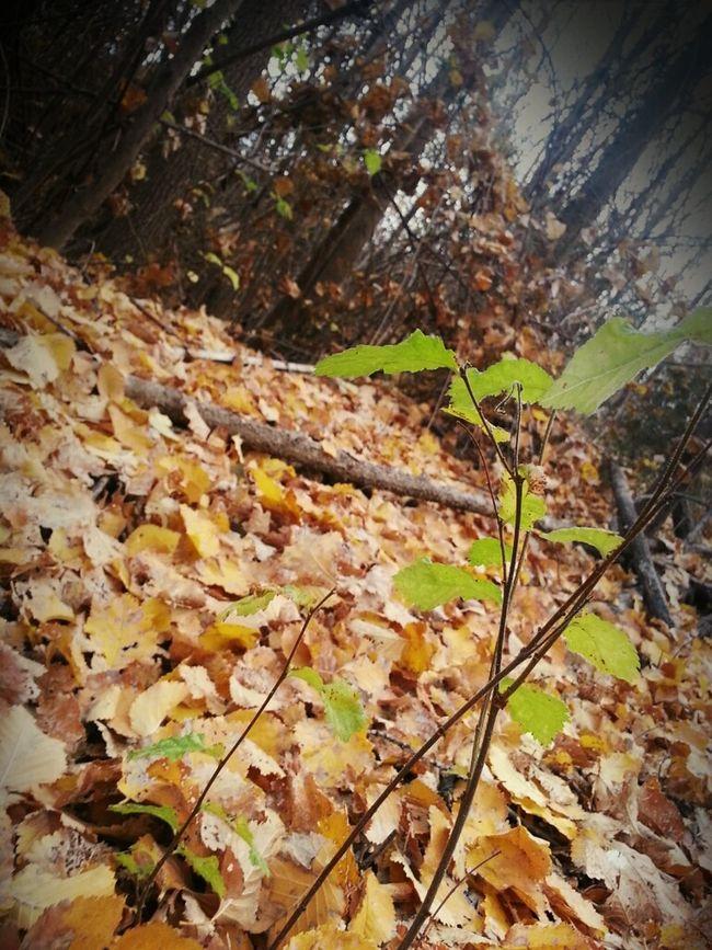 Se acabaron las sombras y el dorado cubre de esperanza nuestros sueños...surge la vida!!
