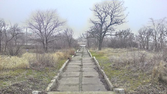 Nature Landscape Mist Road Trees