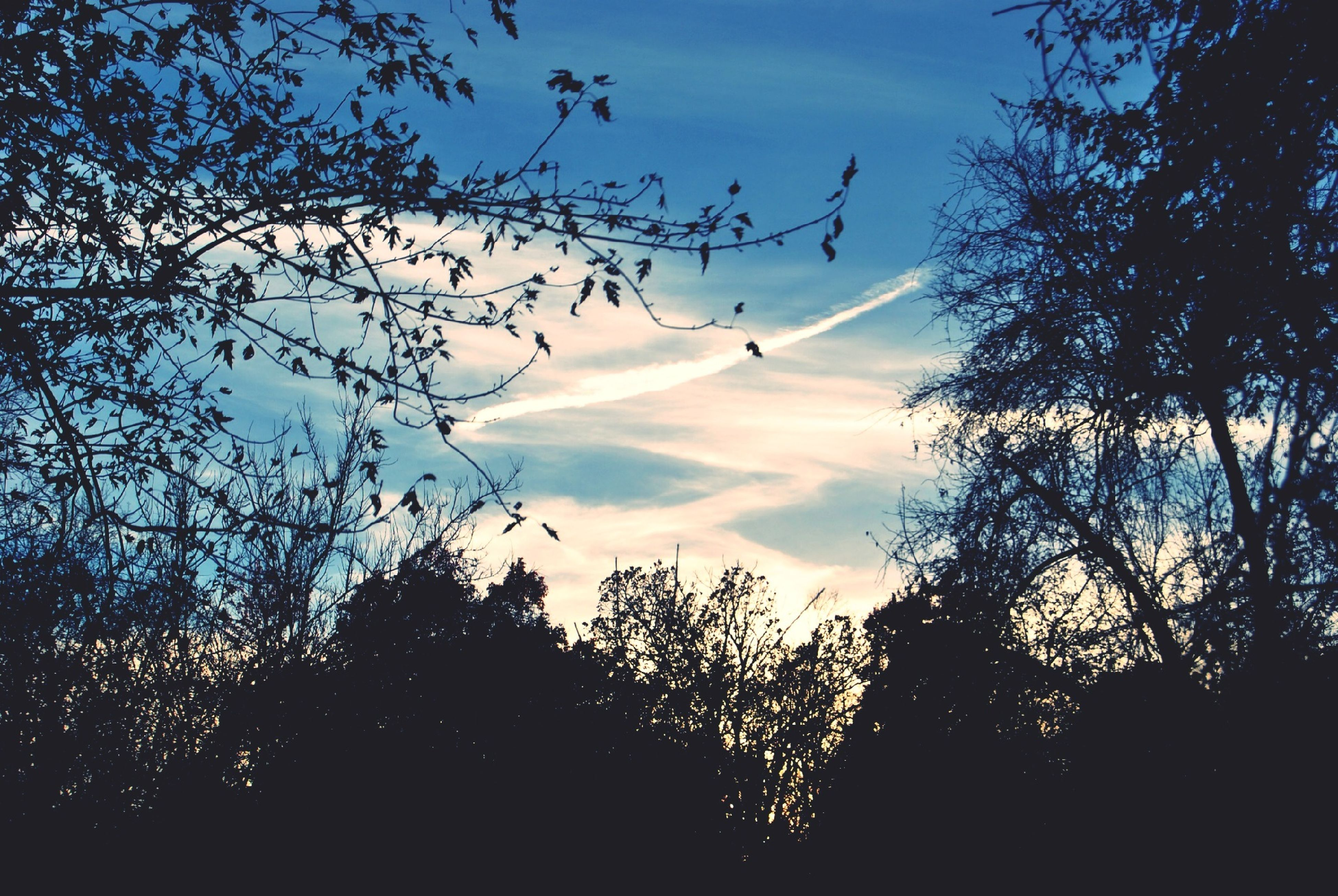 tree, silhouette, sky, flying, low angle view, branch, tranquility, scenics, beauty in nature, nature, tranquil scene, cloud - sky, sunset, growth, cloud, mid-air, outdoors, no people, bare tree, dusk