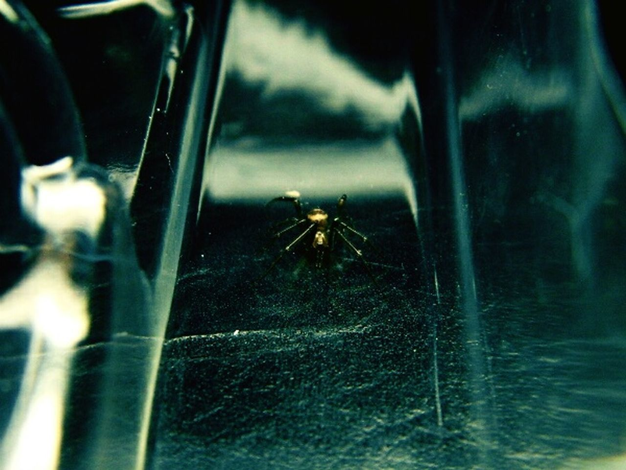 one animal, animal themes, insect, animals in the wild, spider, close-up, animal wildlife, spider web, day, no people, outdoors, focus on foreground, nature