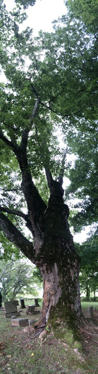 tree, tree trunk, nature, day, growth, tranquility, no people, branch, beauty in nature, outdoors, scenics