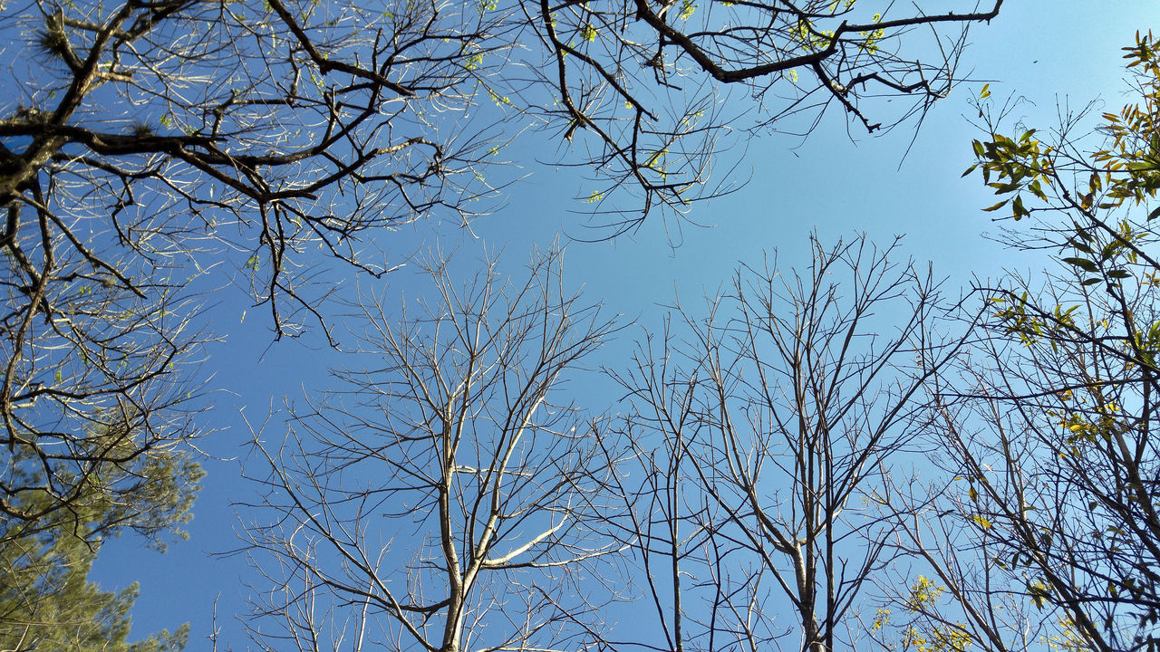 branch, tree, low angle view, nature, bare tree, blue, clear sky, no people, growth, outdoors, beauty in nature, day, sky