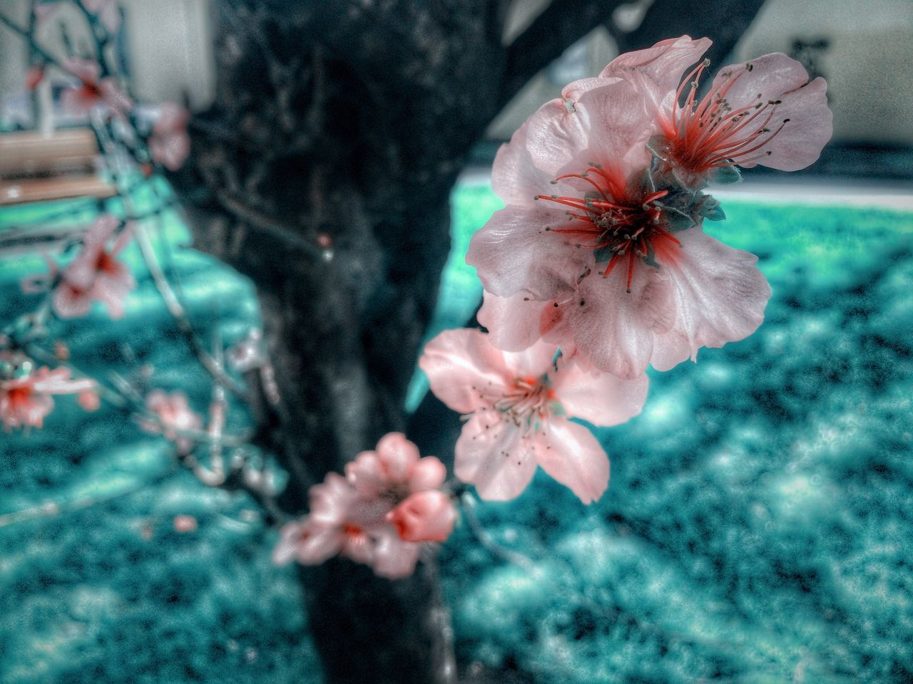 Hdr_Collection Tree_collection  Nature_collection Nature Photography Flower Collection