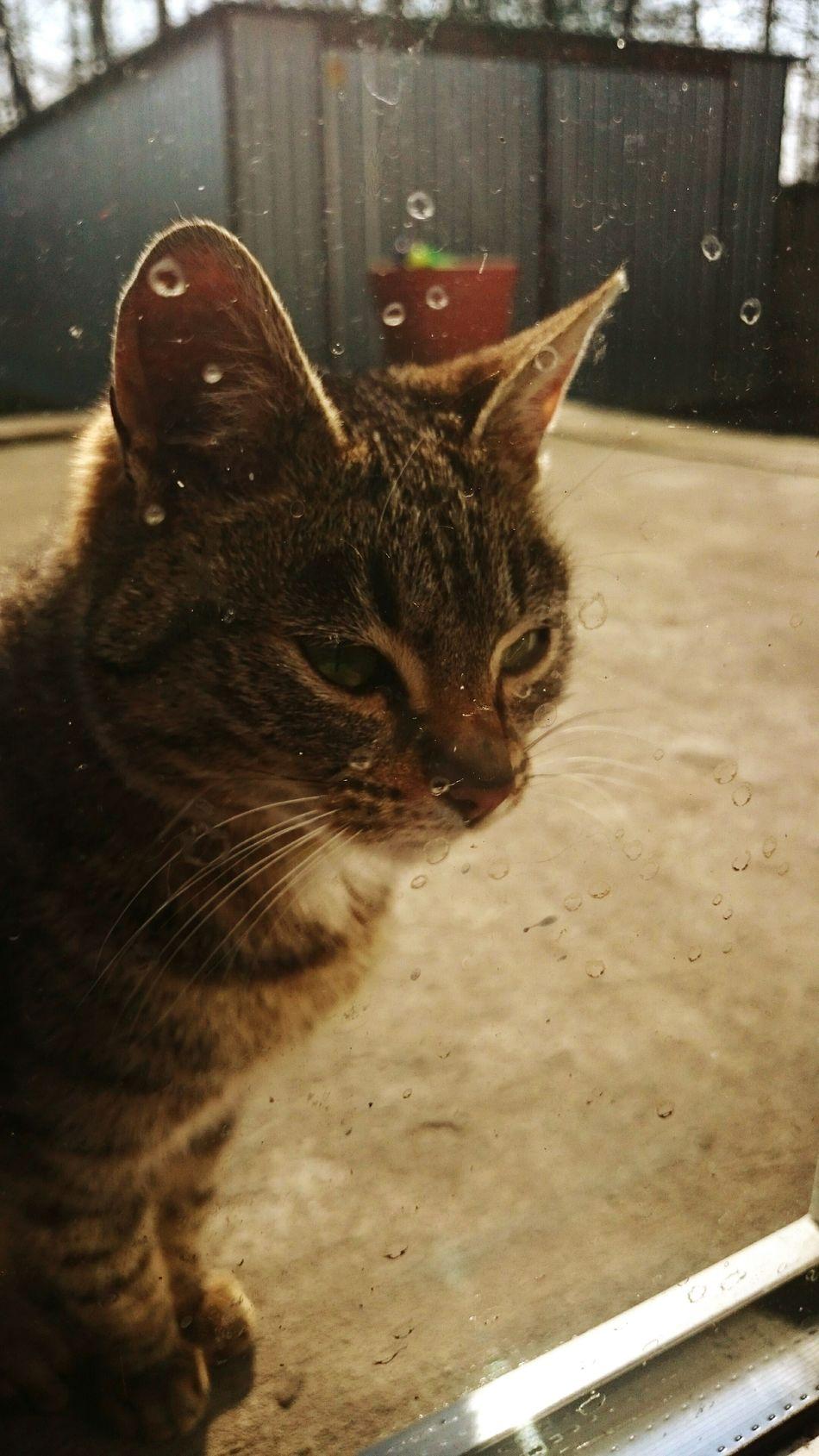 Relaxing Hi! Cat Cat♡