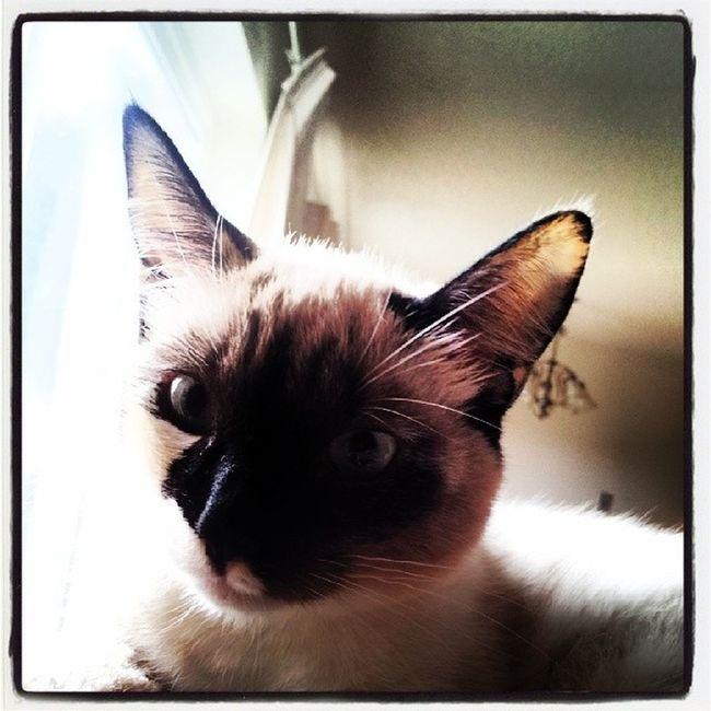 AryaKitty says hi.! WhatDoWeSayToDeath ? NotToday ! Kittykisses kittyporn lovemykitty FuzzyBuddy Meow IMissYouMoonchild