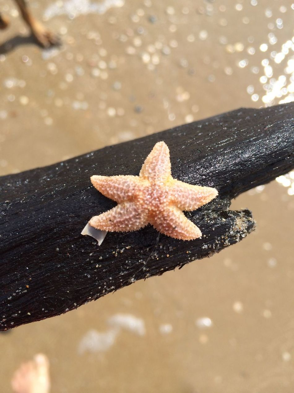 Beautiful stock photos of starfish, Animal Themes, Beach, Day, Dead Animal