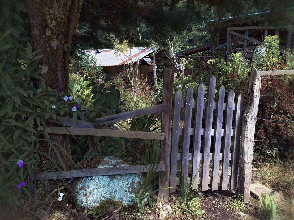 Beautiful stock photos of garden, Closed, Costa Rica, Day, Garden