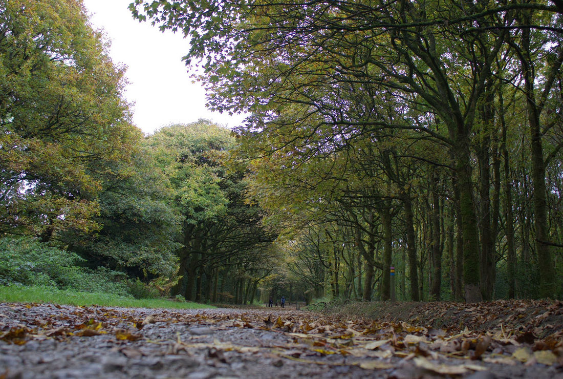 Tree Nature Growth No People Green Color Outdoors Day Beauty In Nature Sky English Countryside Rivington Country Park Tranquil Scene Low Angle View Tranquility Path Pathway Path In Nature Pathway In The Forest Path In The Woods Autumn Autumn Colors Autumn Colours Autumn🍁🍁🍁