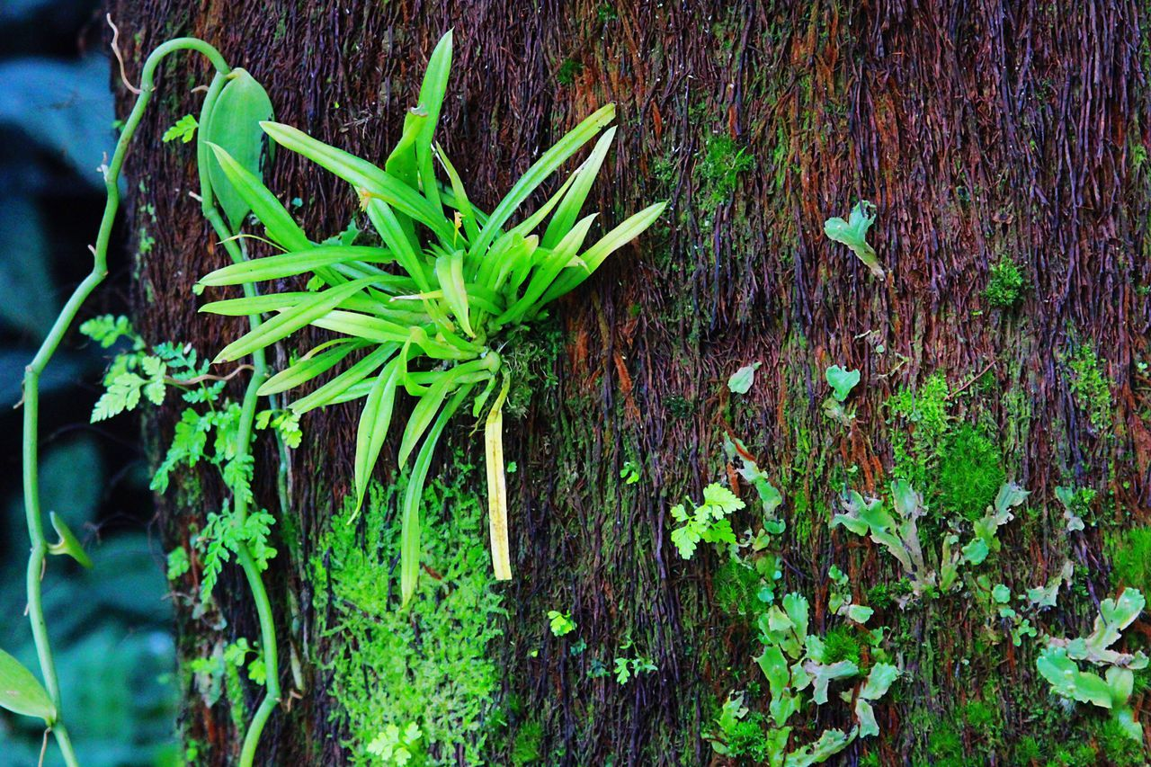 green color, plant, growth, nature, leaf, no people, day, outdoors, freshness, close-up, beauty in nature