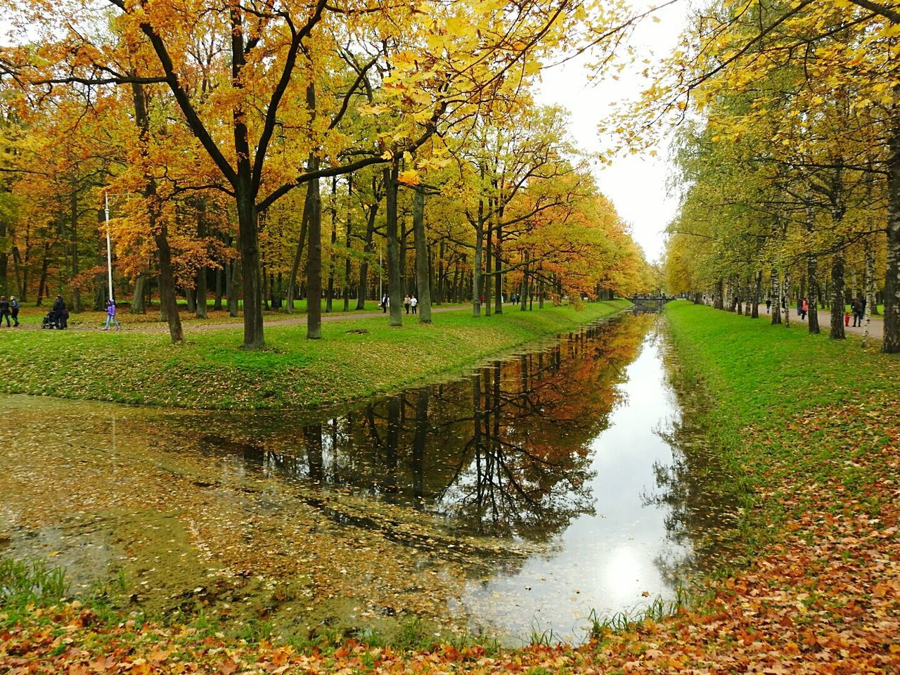 autumn, tree, nature, leaf, change, beauty in nature, water, scenics, tranquility, reflection, grass, growth, tranquil scene, outdoors, day, park - man made space, no people, lake, landscape, branch, sky