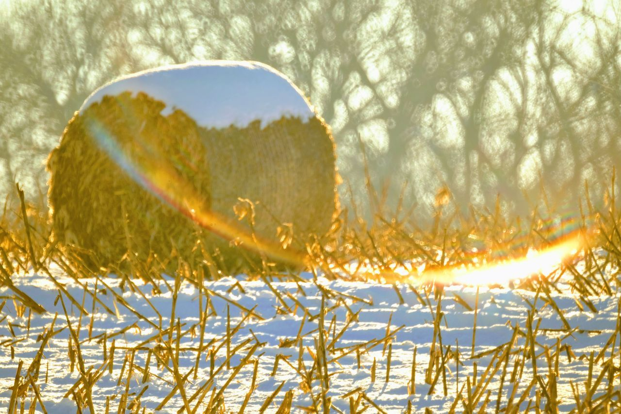 Visual Journal December 2016 Western, Nebraska (Fujifilm Xt1,Nikkor 500mm f8) edited with Google Photos. A Day In The Life Camera Work Cold Temperature Eye For Photography EyeEm Best Shots Farmland FUJIFILM X-T1 Great Plains Hay Bale Haystack Lensflare Manual Focus MidWest My Neighborhood Nikkor 500mm F8 No People Outdoors Photo Diary Rural America Small Town Stories Snow Storytelling Visual Journal Winter Wintertime