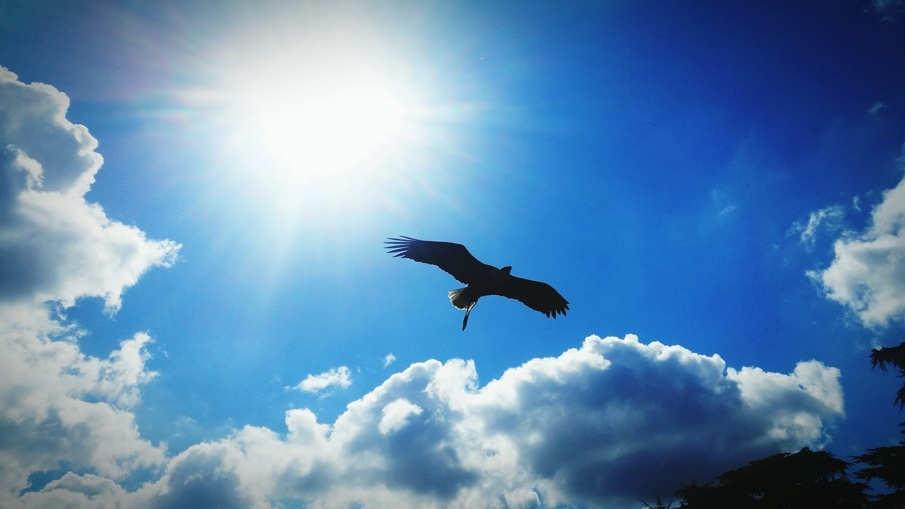 Beautiful stock photos of vogel, Animal Themes, Animal Wildlife, Animals In The Wild, Blue