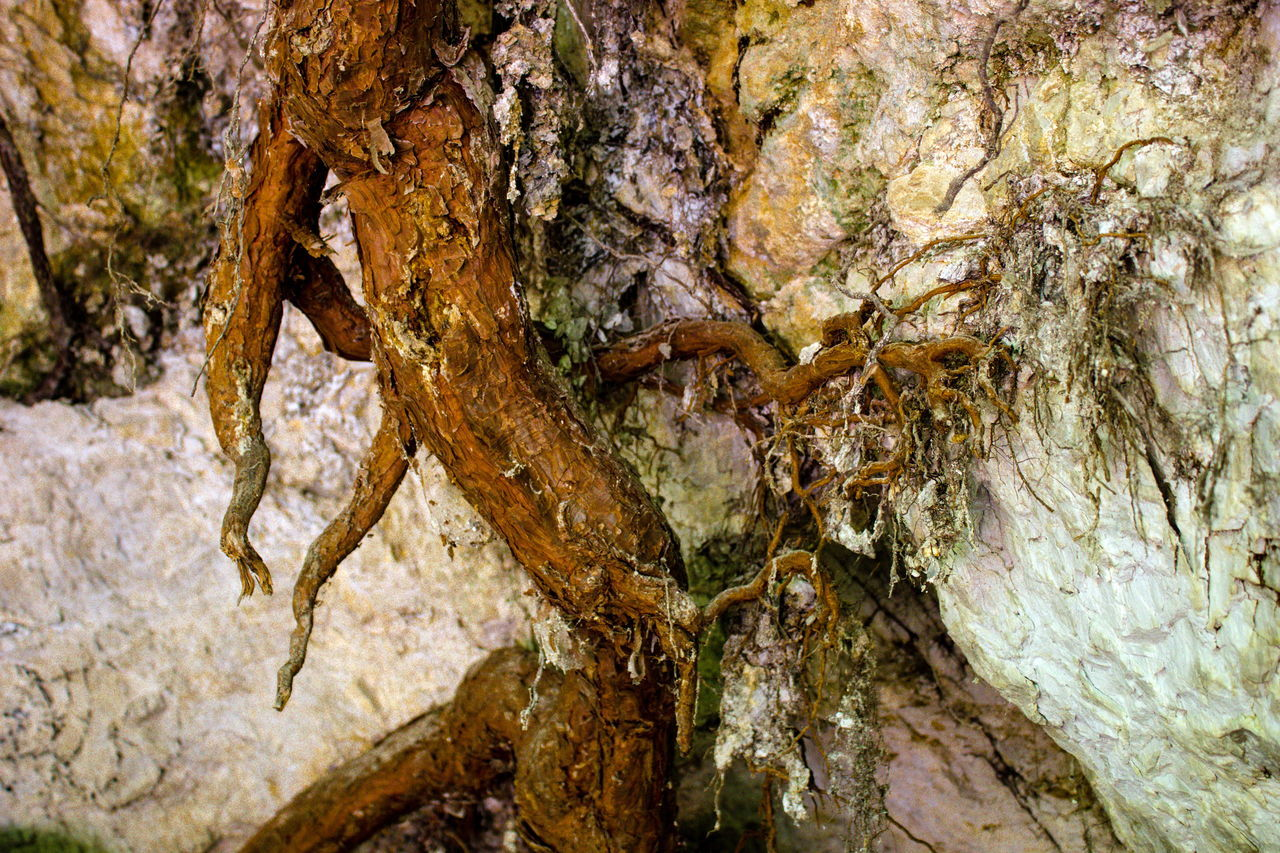 Beauty In Nature Close-up Day Nature No People Outdoors Root Rooted Roots Roots Of Tree Textured  Tree