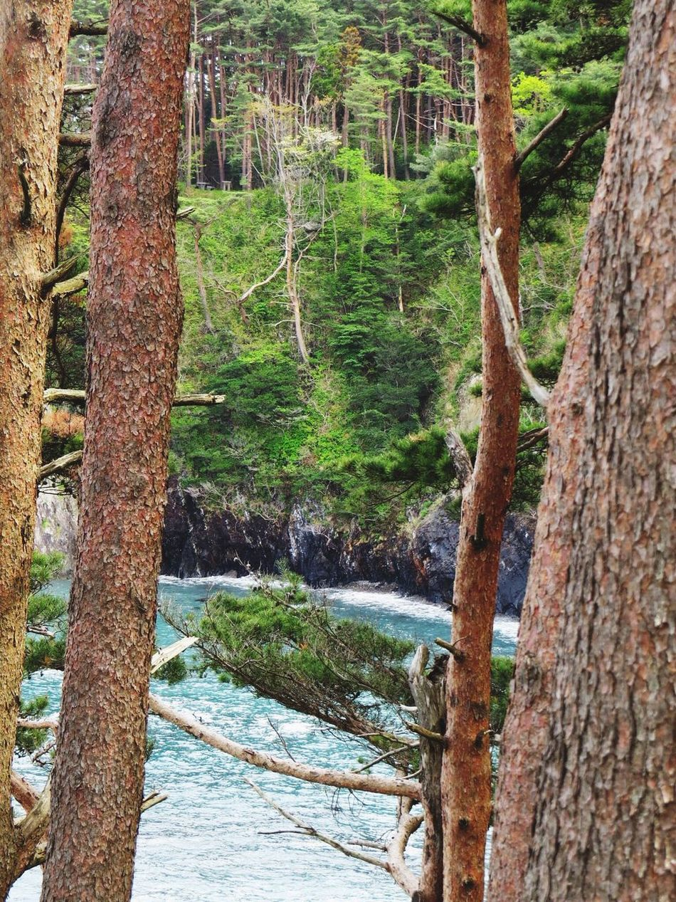 Travel Photography Travel Destinations Japan Iwate Oofunato 大船渡 碁石海岸 Goisi-Kaigsn(coast) Beauty In Nature Nature Seaside Sea Pine Pine Grove Pinetrees