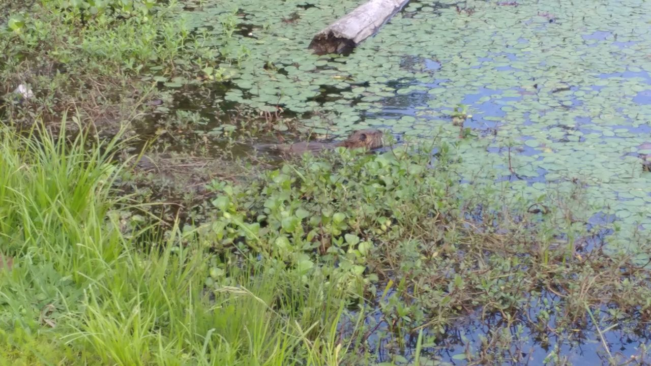 High Angle View Water Grass Outdoors Day Nature Reflection No People Growth Puddle Beauty In Nature Neutra Rat