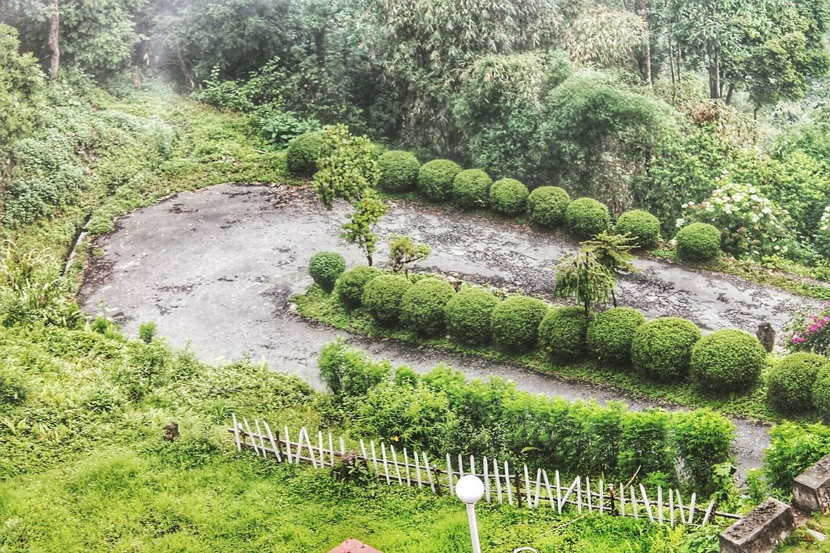 The View From My Window In The Hotel Greenery Scenery Green Nature EyeEm Best Edits EyeEm Best Shots Road Down The Hill EyeEm Hd Wallpapers Taken In Sikkim, India Incredible India ☺☺