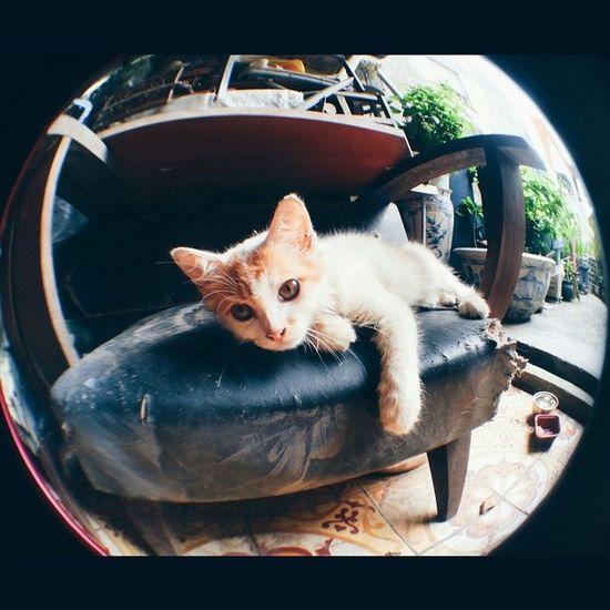 My little cat through my new lens. Littlecat  Meomeo Maowmaow Fisheyes