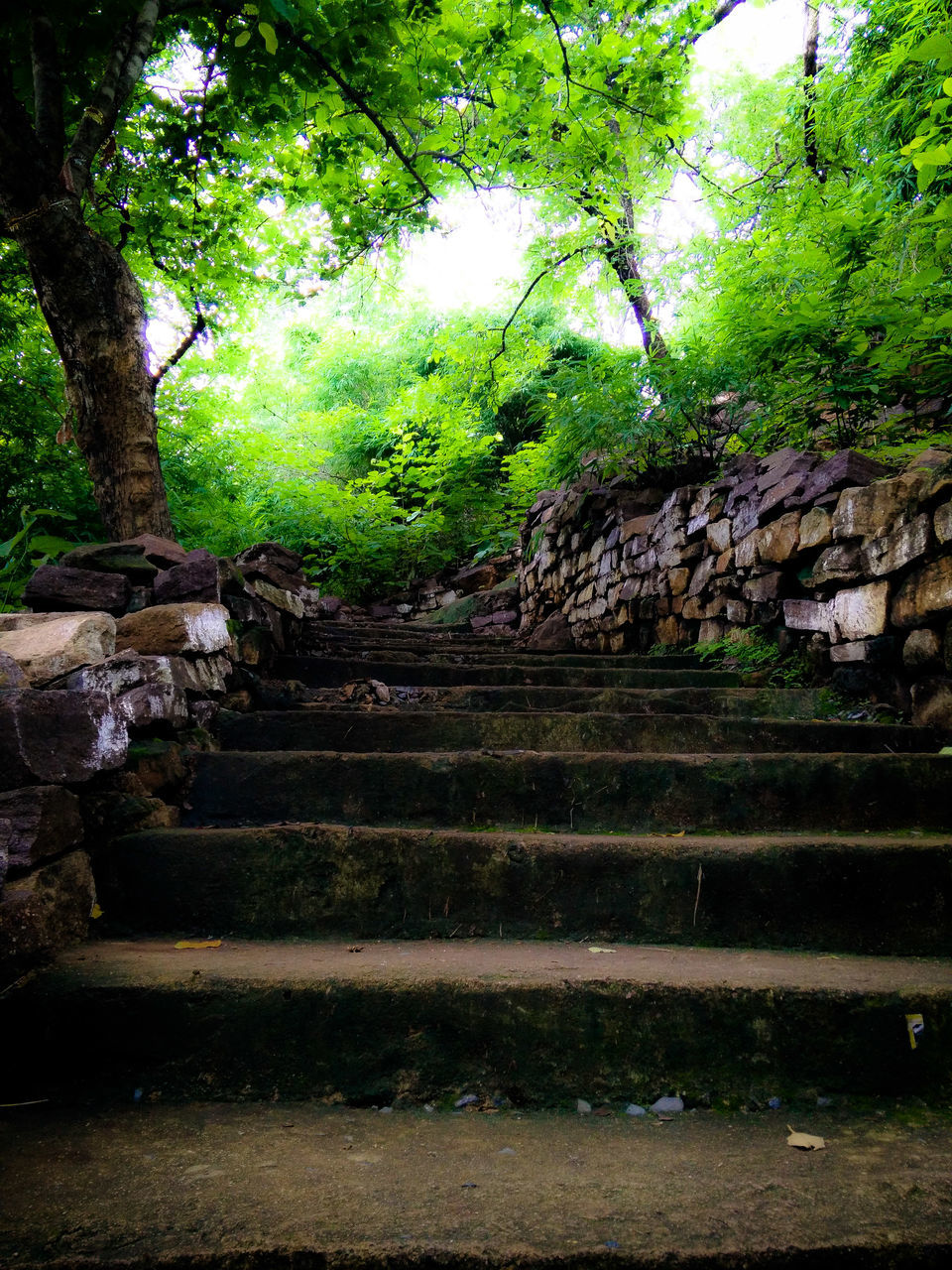 steps, staircase, steps and staircases, history, no people, tree, nature, ancient civilization, day, architecture, outdoors