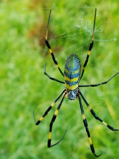 Spider Web Spider Close-up Insect Animal Themes Nature Outdoors Beauty In Nature Travel Photography Travel Photography Travel Destinations Taking Photos Perfection Nature Photography Colors Beauty Japan Nokogiriyama