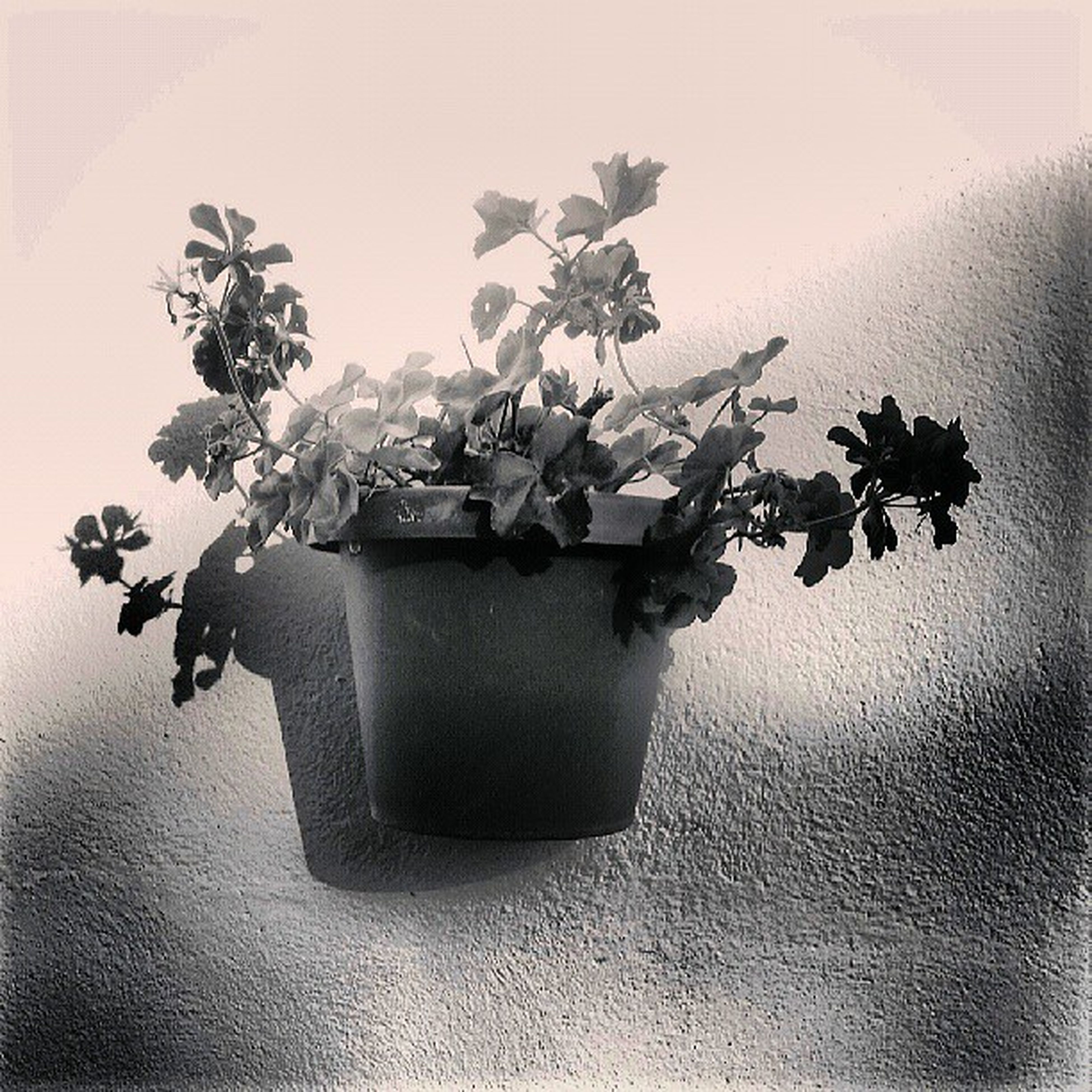 plant, wall - building feature, flower, growth, indoors, leaf, potted plant, vase, freshness, close-up, fragility, table, wall, decoration, nature, no people, stem, still life, home interior, auto post production filter
