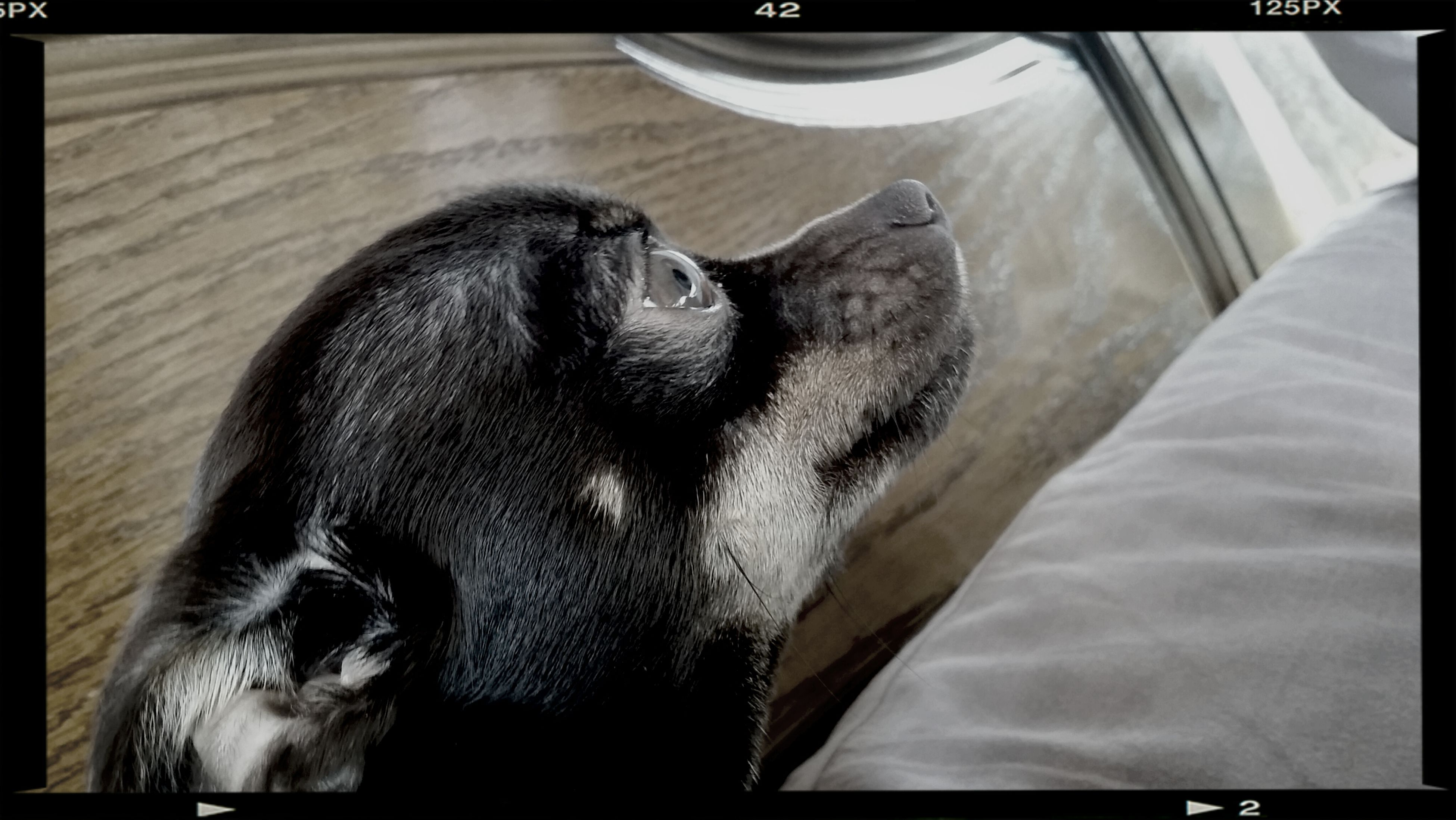 animal themes, transfer print, one animal, domestic animals, auto post production filter, mammal, indoors, pets, dog, relaxation, wildlife, two animals, animals in the wild, resting, animal head, close-up, no people, zoology, day, animal body part