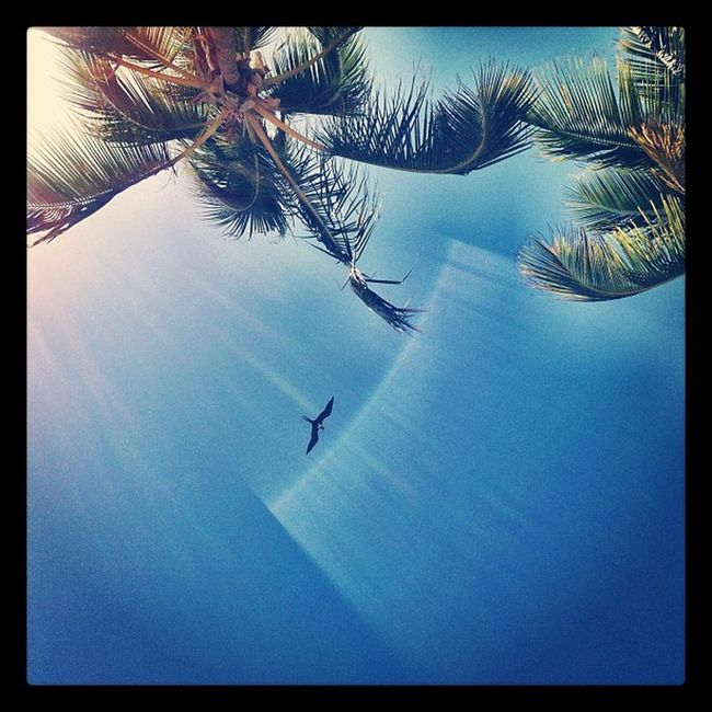 pterodactyl Domrep Pterodactyl Dinosaur Sun Sky Bird Rays Palmtrees Puntacana Iphone4