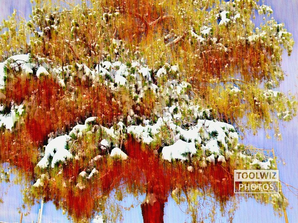 Winter Snow Outdoors Beauty In Nature Utahisawesome Winterwonderland