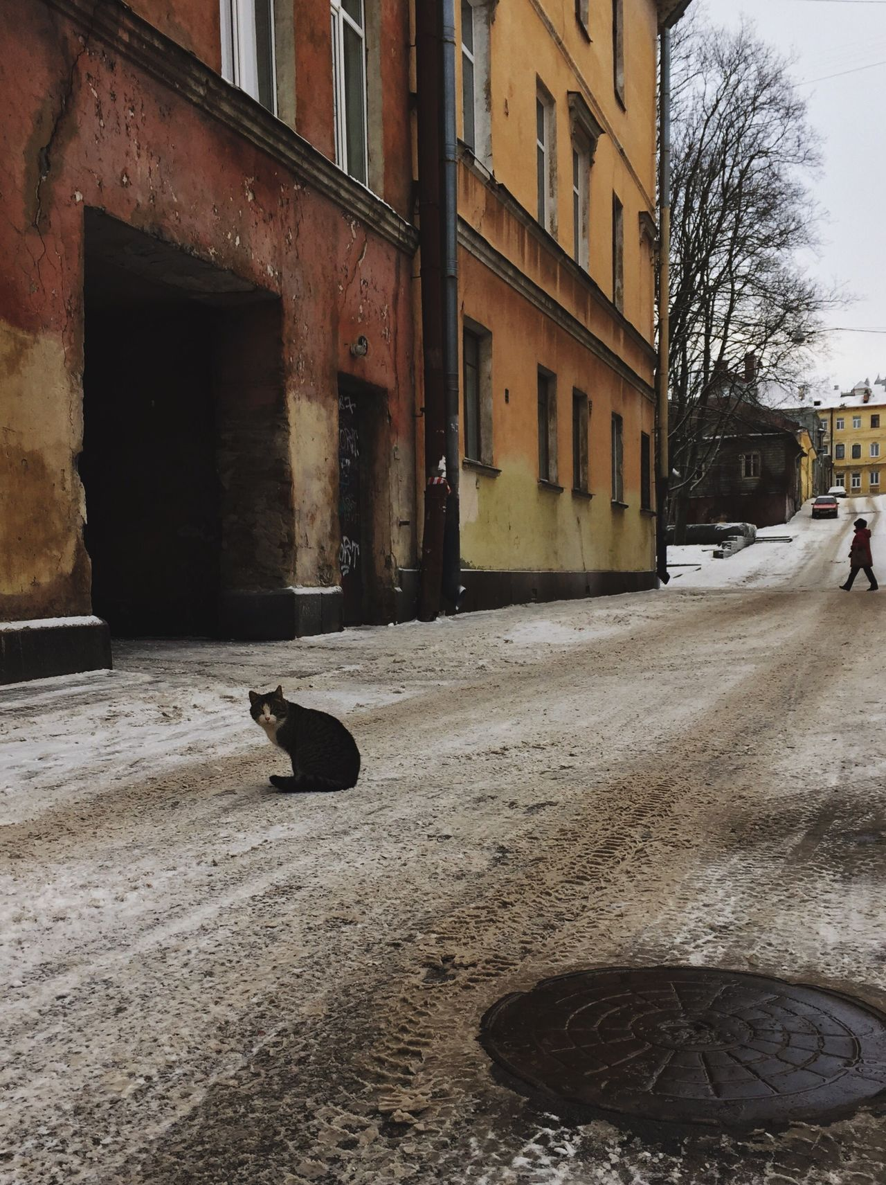 Street Building Exterior Architecture Domestic Animals Domestic Cat One Animal Pets Outdoors Day Russia Winter Snow Vyborg Cat Adapted To The City