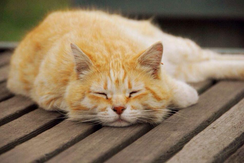 Single-lens Reflex Macro Lens Cat Sleep 一眼 マクロ Stray Cat