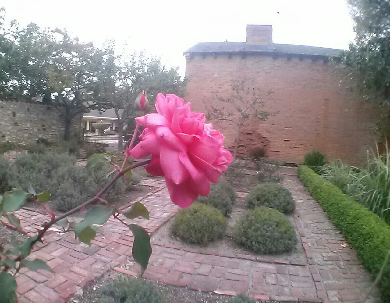 Monterey Ca Flower Porn Roses Eyeemphotography The Purist (no Edit, No Filter) No Edits No Filters . First Brick House Whailing Station Historical Place