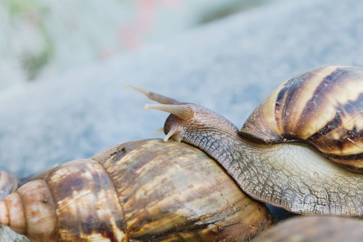 Snail🐌 Snails In Shells Beauty In Nature Snail Life