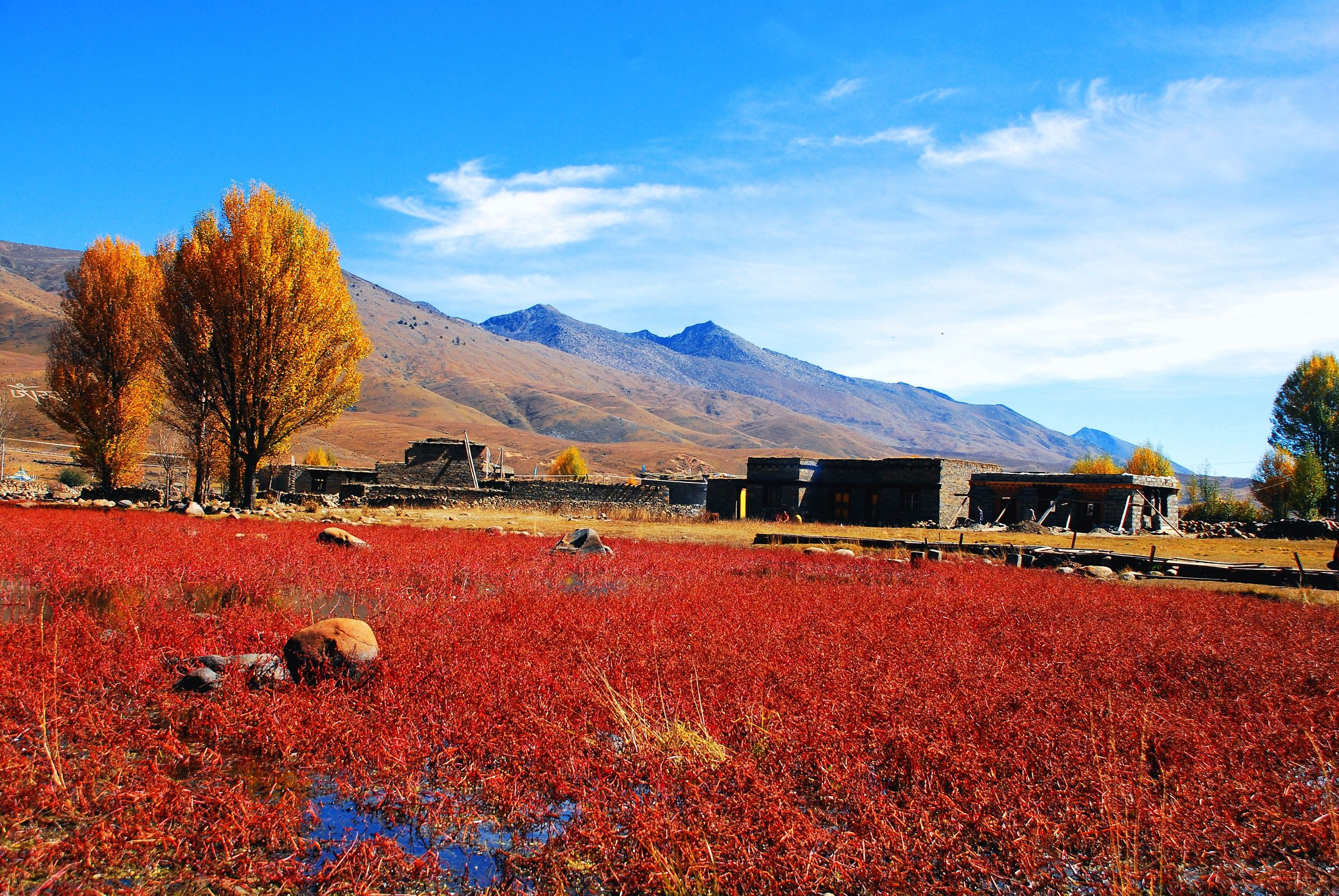 mountain, tree, sky, landscape, beauty in nature, tranquil scene, tranquility, mountain range, scenics, nature, season, blue, flower, house, autumn, growth, red, field, built structure, snow
