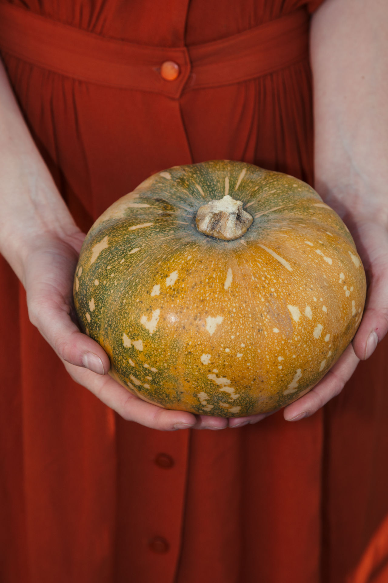 Adult Autumn Close-up Day Fall Food Food And Drink Freshness Fruit Halloween Halloween Healthy Eating Holding Human Body Part Human Hand Indoors  Midsection One Person People Pumpkin Real People Squash Standing
