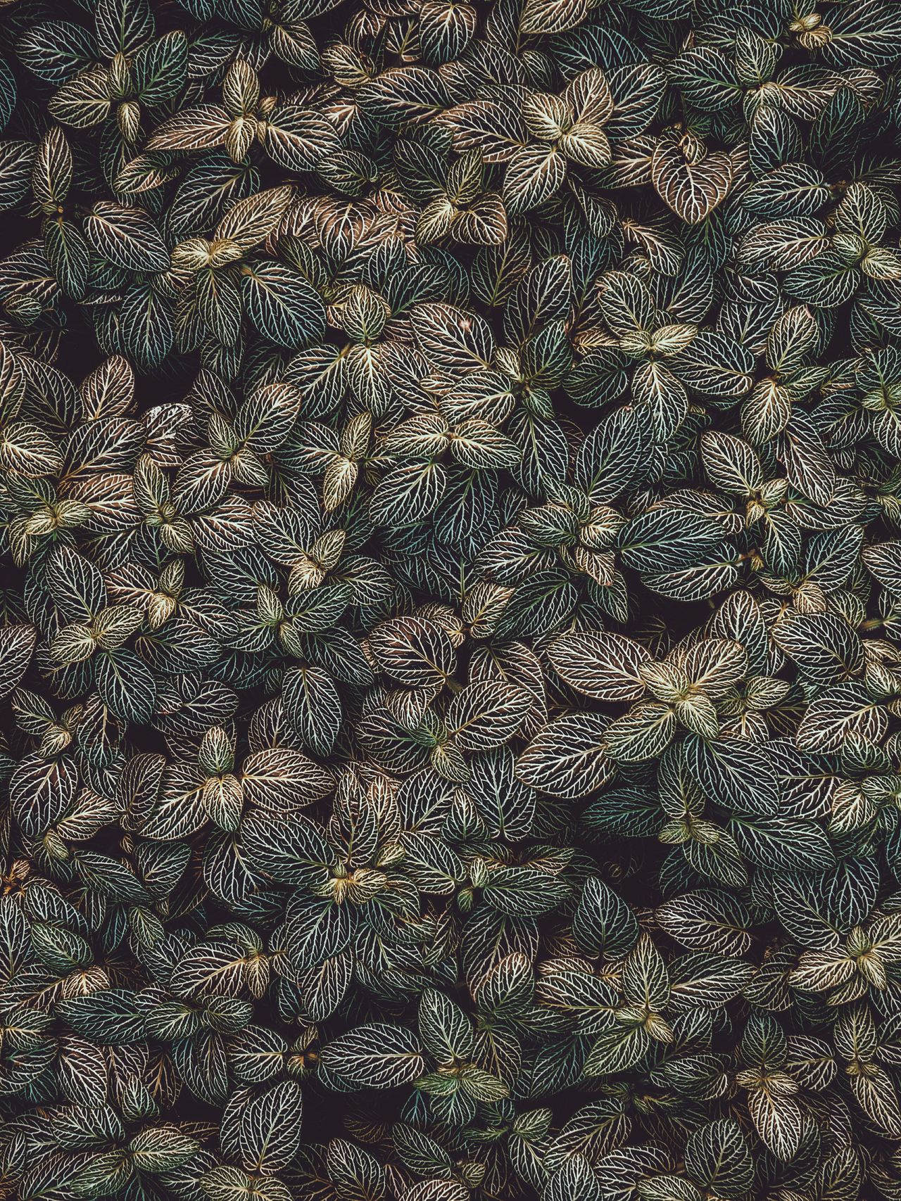 Pattern Backgrounds Full Frame Abstract Textured  No People Outdoors Aerial Nature Beauty In Nature Growth Plant Green Color Scenics Dramatic Sky High Angle View Landscape