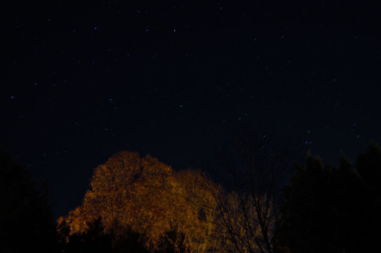 night scape 2 minute exposure. Astronomy Beauty In Nature Constellation Galaxy Idyllic Infinity Low Angle View Nature Night Night Photography Night Scape No People Outdoors Scenics Sky Space Space And Astronomy Star - Space Star Field Tranquil Scene Tranquility Tree