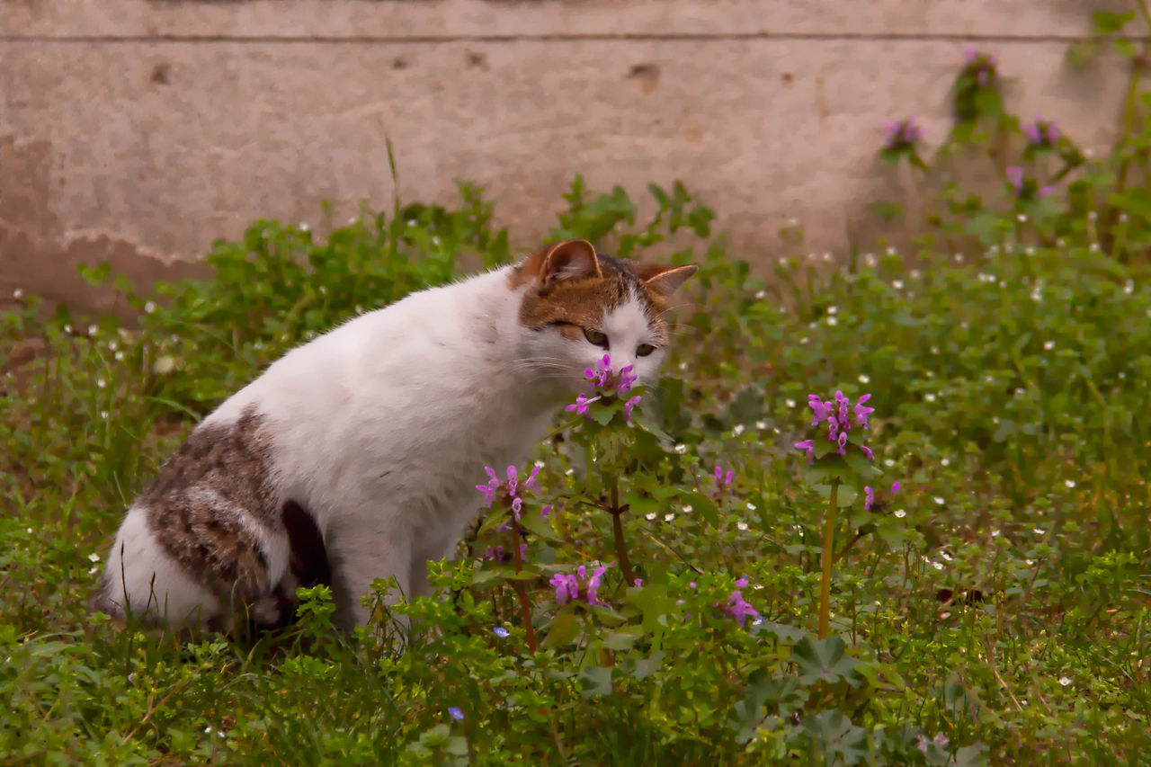 Take A Sniff Animal Themes Beauty In Nature Blooming Close-up Day Domestic Animals Feline, Tomcat, Tom, Kitten, Mouser; Alley Cat; Kitty, Furball; Flower Focus On Foreground Fragility Grass Grassy Green Color Growth Mammal Nature No People Outdoors Pets Plant