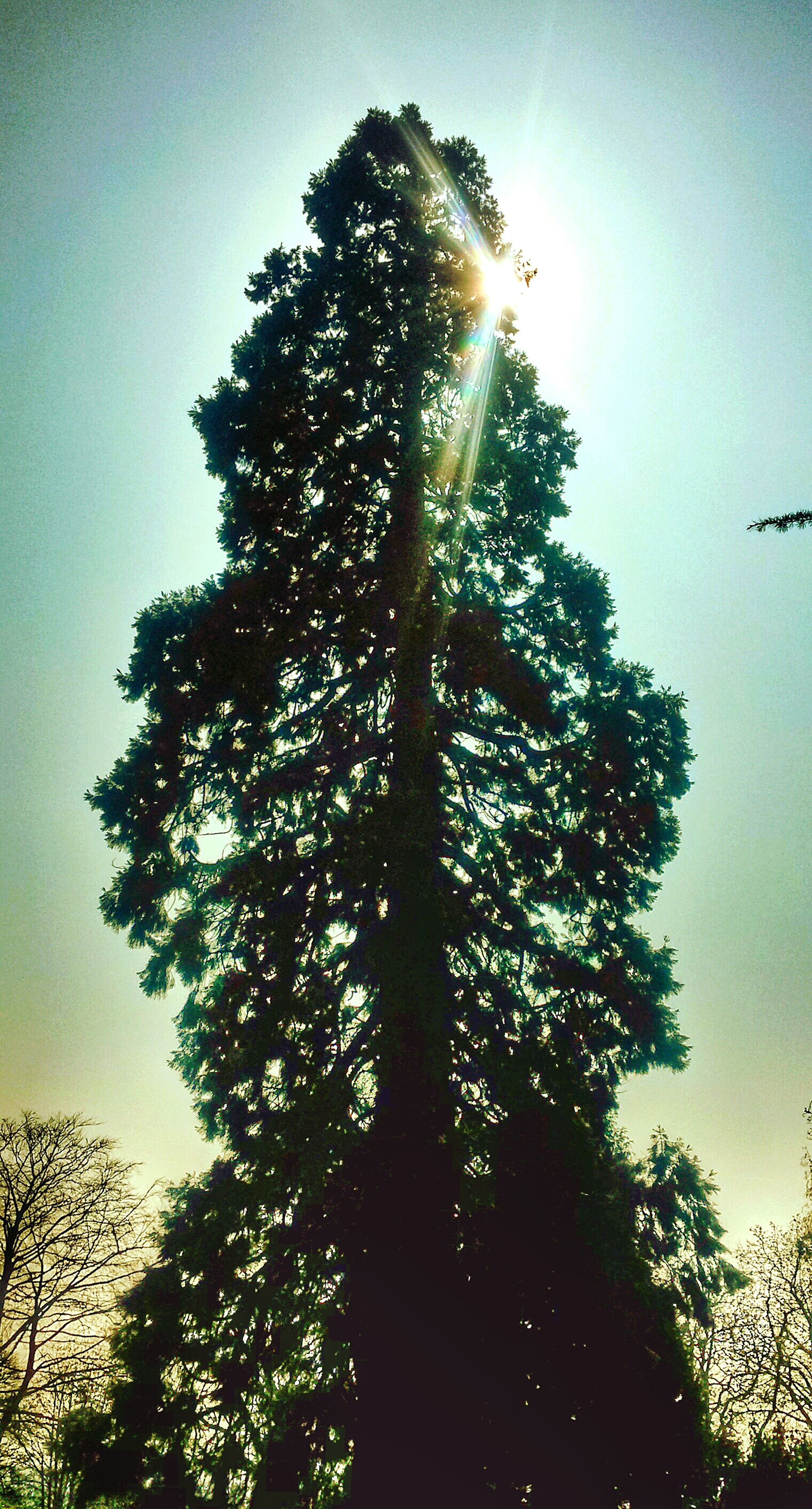 tree, low angle view, sun, silhouette, growth, sunlight, sunbeam, sky, branch, clear sky, nature, tranquility, lens flare, beauty in nature, back lit, sunset, outdoors, no people, tranquil scene, scenics