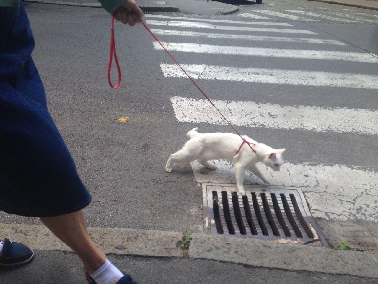 Belgrade Serbia Catlady Catontheleash Ontheleash Crazycatlady Cat Streetlife