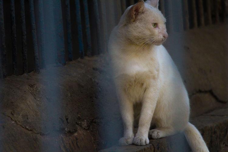 Cat in Mumbai Zoo (Veermata Jijabai Udyan) Animal Themes Cage Cat Cat In Zoo Cat Lovers 🐱💞 Cat♡ Close-up Indoors  Jijabai Udyan Mum Jijamata Udyaan Mumbai Zoo Mumbai Zoo Veermata Jijabai Udyan Nature One Animal Wild Cat Wild Cat ;) Zoo Animal Zoo Cat Zoo In Mum