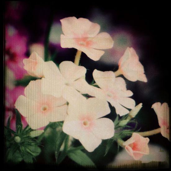 Flowers Pings