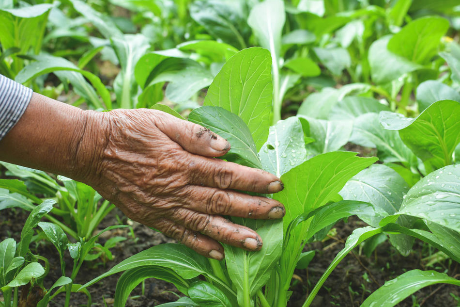 Beautiful stock photos of senior,  Adult,  Adults Only,  Agriculture,  Care