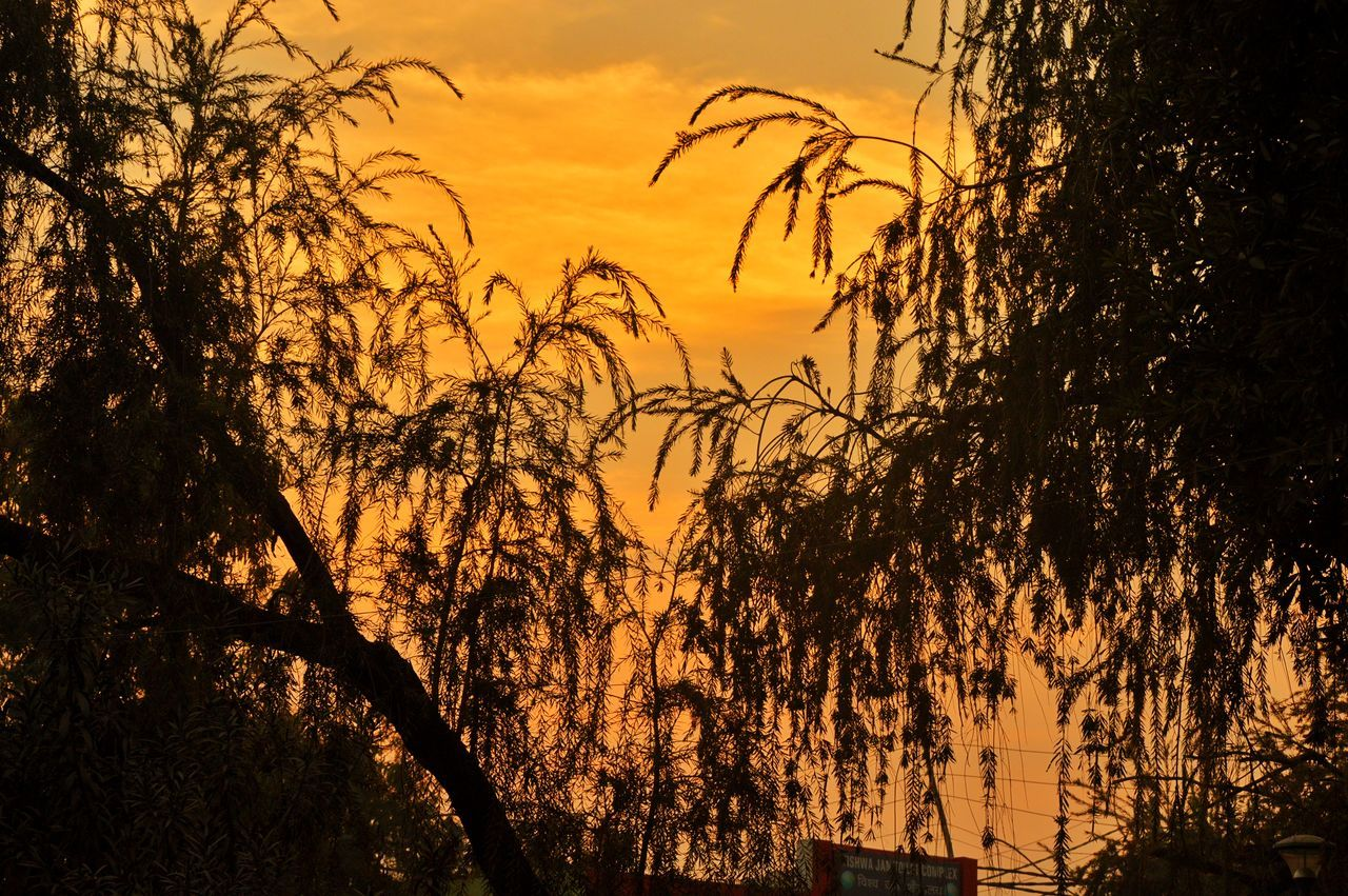 sunset, tree, silhouette, nature, beauty in nature, growth, scenics, tranquil scene, outdoors, no people, sky, tranquility, plant, low angle view, day