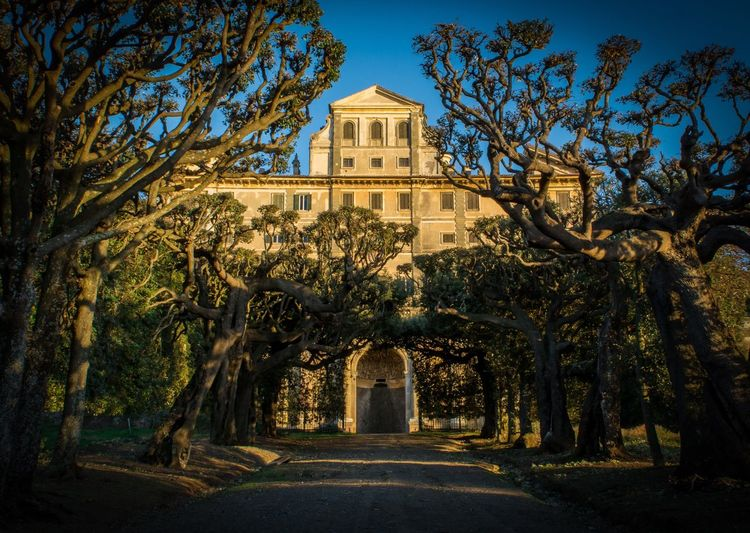 Villa Aldobrandini 2.0 Tree Building Exterior Architecture History Built Structure Government Nature No People Outdoors Clear Sky Day Sky Castelliromani  Photography Picoftheday Amazing Weddinglocation Travel Tourism Rome