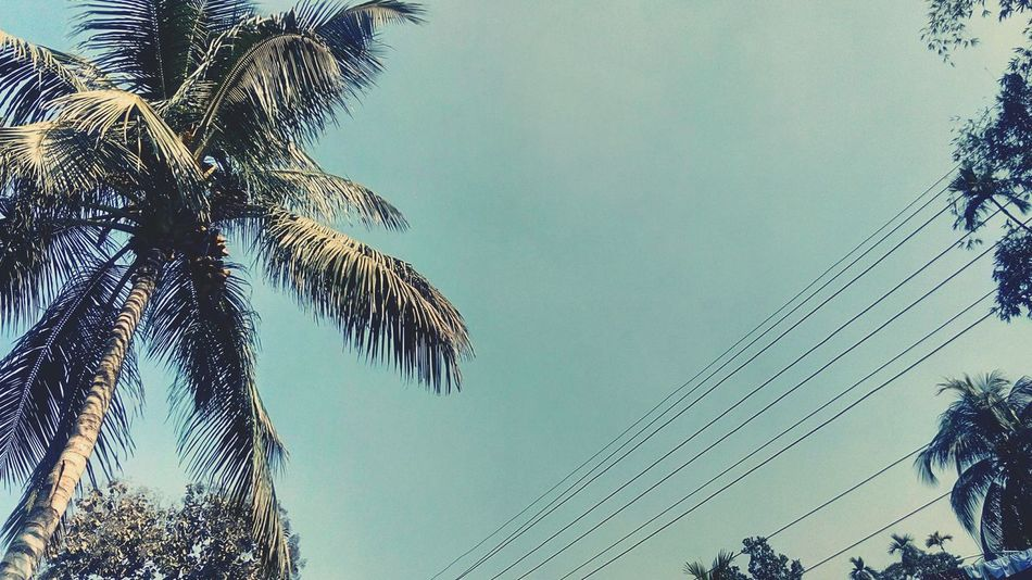 Tree The Morning Sunside Coconut Tree.And The Blue Sky oposit side Electric wire...etc First Eyeem Photo