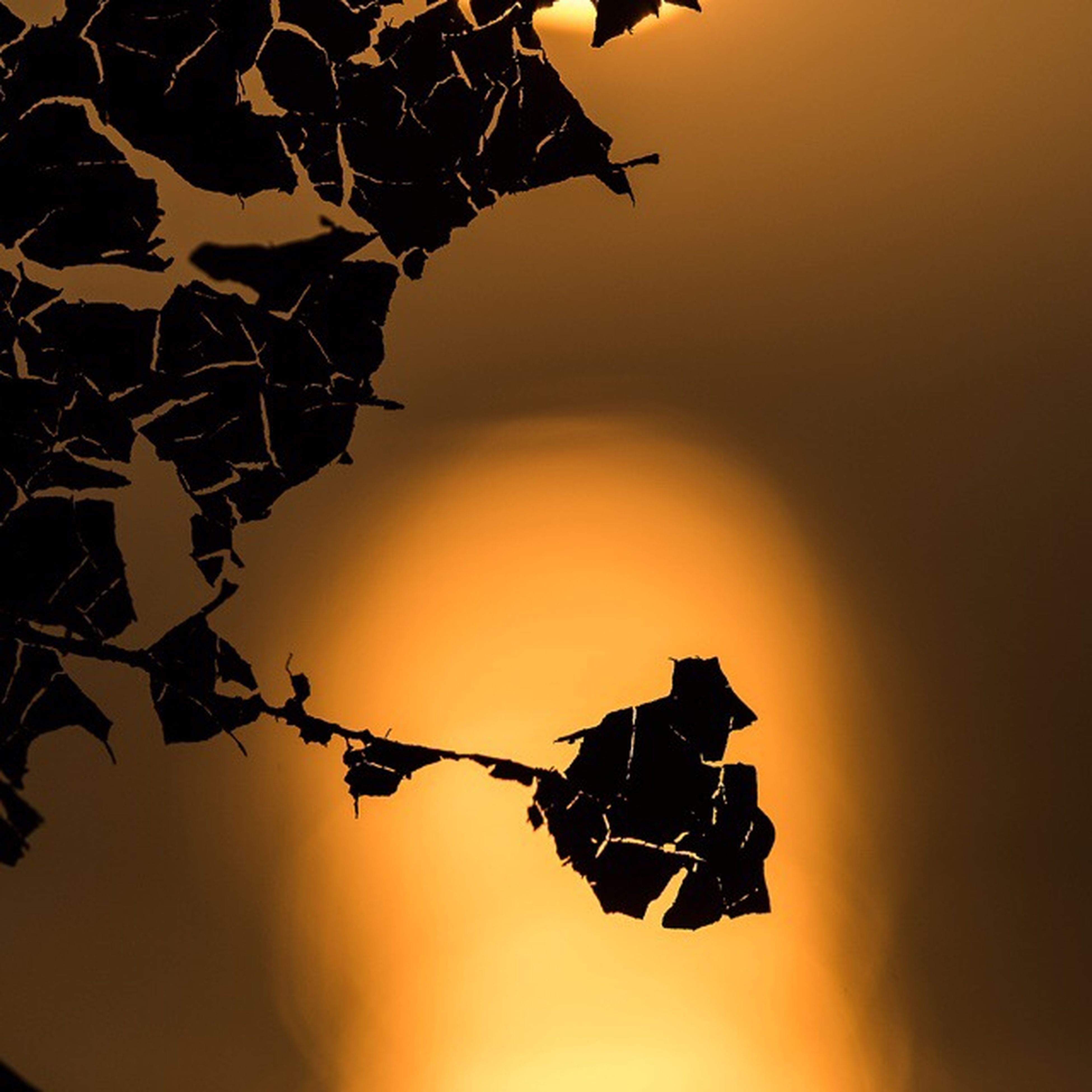silhouette, sunset, beauty in nature, nature, outdoors, no people, close-up, astronomy, day