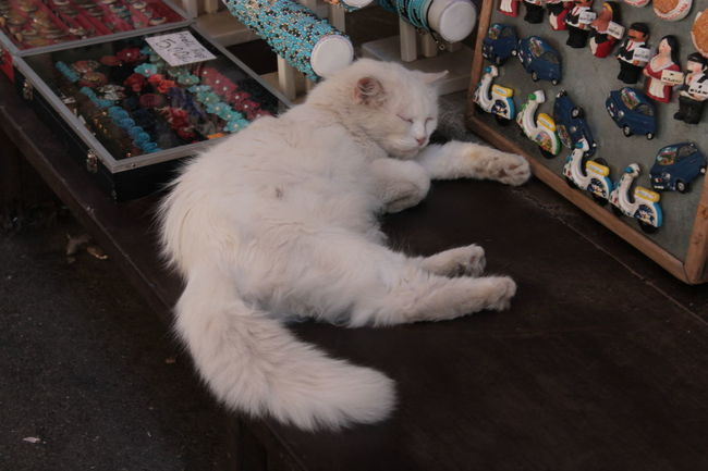 I Need Sleep  Sleaping Kitty Cat Cat Souvenirs
