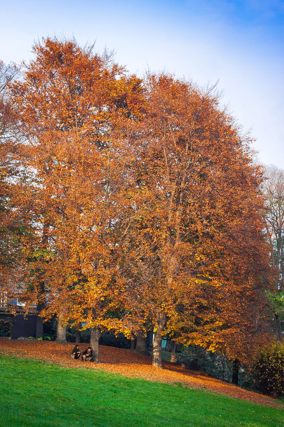 I due, quei due, davvero | Il Valentino Autumn Autunno  Beauty In Nature Day Fall Growing Love Love Tree Nature Outdoors Parco Del Valentino Parcovalentino Park Season  The Way Forward Torino Tranquility Tree Tree Trunk Turin Turin Italy