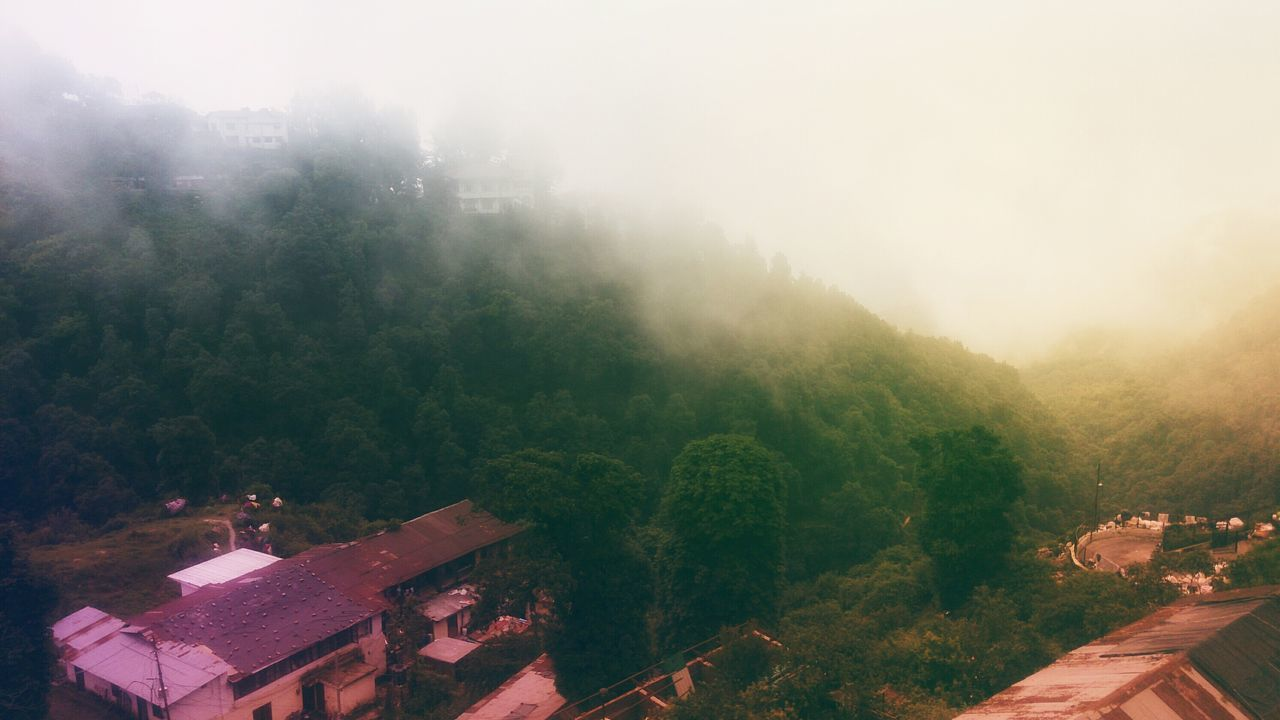 tree, fog, nature, no people, beauty in nature, mountain, architecture, landscape, outdoors, day