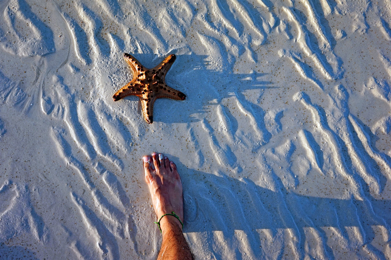 Beauty In Nature Day Elevated View Eyeem Philippines Foot Selfie Leisure Activity Lifestyles Light And Shadows Mammal Nature Outdoors Part Of Personal Perspective Rippled Starfish  Starfish At Beach The Great Outdoors - 2016 EyeEm Awards The Week On EyeEm Vacations Water
